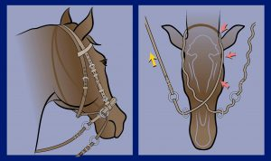 Showing a caudo-lateral and ventral view of the crossunder bitless bridle. A squeeze of the right rein (yellow arrow) nudges the entire left side of the head (red arrows), painlessly signaling 'steer to the right.' An intermittent squeeze on both reins hugs the whole head, signalling 'slow' or 'stop.' © Photo: Robert Cook